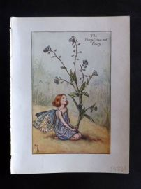 Cicely Mary Barker C1945 Flower-Fairy Print. Forget-me-not Fairy